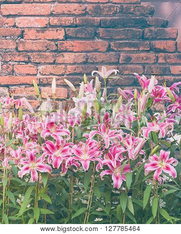 Pink Lily Flower With Old Brick Wall Vintage Style