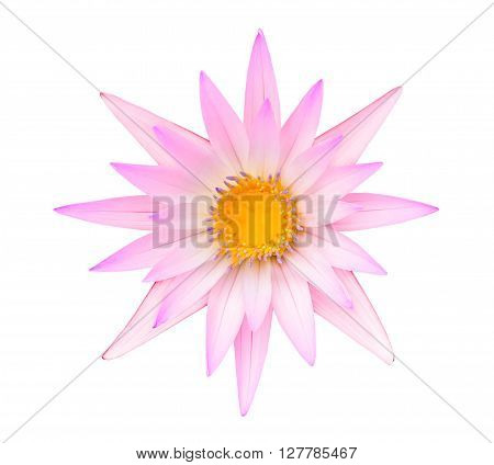 Pink Lotus Or Pink Water Lily Isolated