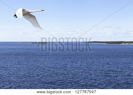 Coast and coastline up North in the Baltic Sea. Islands, rocks and the mainland. Whooper swan in migration this side.