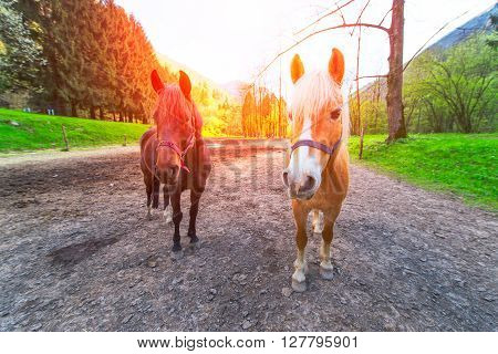 Two nice horses in the middle of a dirt road in a mountain landscape.