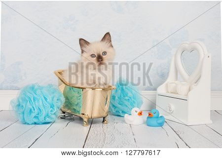 Cute rag doll baby cat in a golden bathtub in a a blue and white bathroom setting