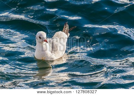 Close Up View Of Seagull