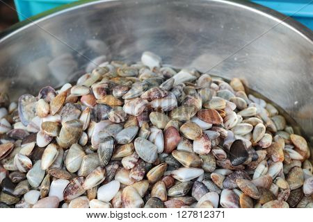salted cockle for cooking in the market