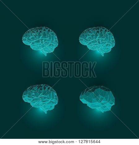Set of Brains. Abstract Concept of Active Human Brain. Low Polygon Look of Brain