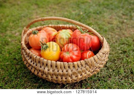 Ripe tomatoes in a basket on grass background