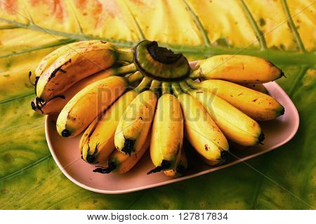 bunch of mini bananas served on palm tree leaf served for dietary light breakfast