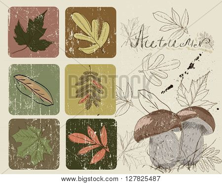 Vintage poster with autumn plants 2. Vector illustration EPS10