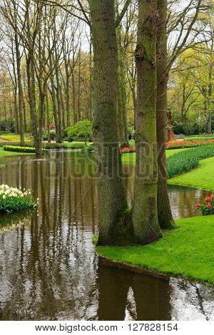Spring pond  reflections in garden Keukenhof, Netherlands