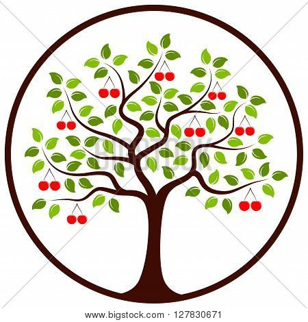 vector cherry tree in round isolated on white background