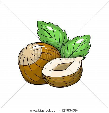 Vector hazelnut illustration. Slice of hazelnut, hazelnut isolated on white background. Vector sketch hand drawn fruit - stock vector
