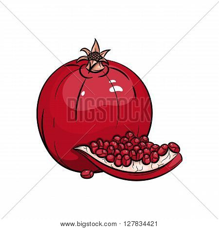 Vector garnet illustration. Slice of garnet, garnet isolated on white background. Vector sketch hand drawn fruit - stock vector