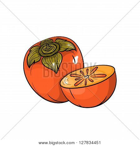 Vector persimmon illustration. Slice of persimmon, persimmon isolated on white background. Vector sketch hand drawn fruit - stock vector