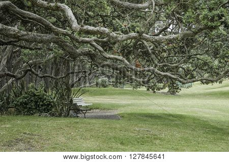 Gnarled and twisted branches of trees over park benches giving an eerie atmosphere