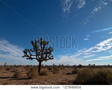 Joshua Tree cloudscape in Southern California high desert under cirrus sky