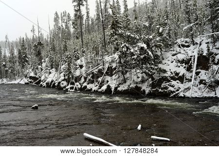 Snowy Morning on the Madison River in Yellowstone National park