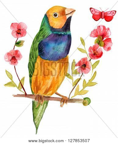 A watercolor illustration of a finch sitting on a branch of flowering quince hand painted in watercolor on white background with a butterfly