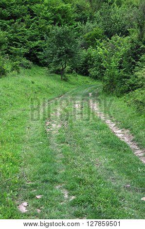 Dirt road in the woods in Bulgaria