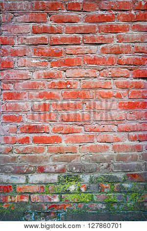 Old red brick wall backgrounds with spot of lichen or moss, weathered brick wall vertical background, copyspace