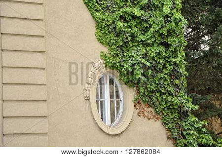 Elliptical window of an vintage city house with vines