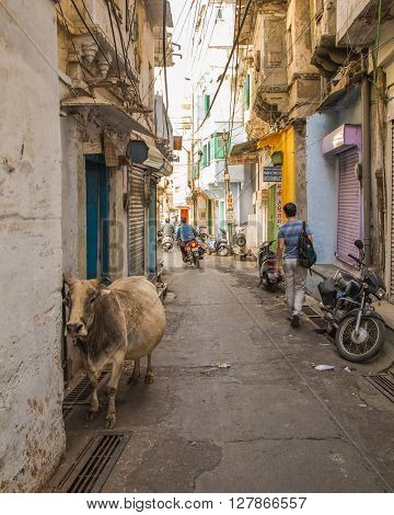 UDAIPUR INDIA - 20TH MARCH 2016: A view along streets of Udaipur. People Motorbikes buildings and a cow can be seen.