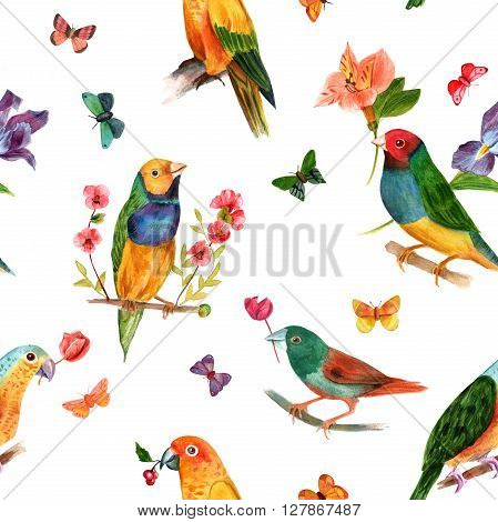 A seamless background pattern with watercolor domestic decorative birds (parrots and finches) hand painted in watercolors in the style of old school botanical art with flowers and butterflies