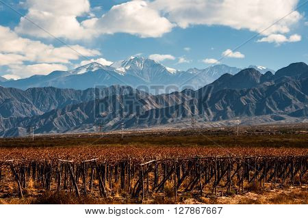 Volcano Aconcagua And Vineyard In The Argentine Province Of Mendoza
