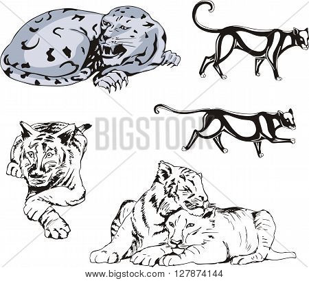 Set of wild predator cats. Vector illustrations.