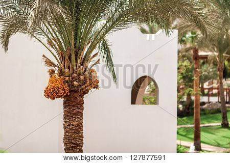 Luxury Egyptian Hotel With Palm Trees And Blue Sky