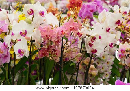Set  of fresh  multicolored  bloomig  orchid flowers