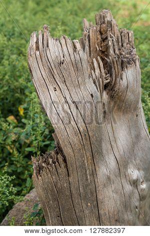 Gnarled old tree stump close up photo