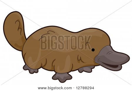 Cute Platypus - Vector