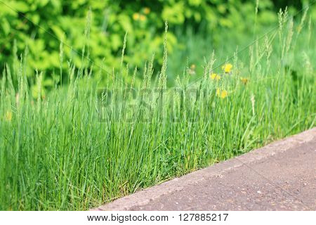 Bright fresh green grass near border on path in summer park close up view