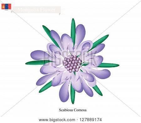 Mongolia Flower Illustration of Scabiosa Comosa Flower. The National Flower in Mongolia.