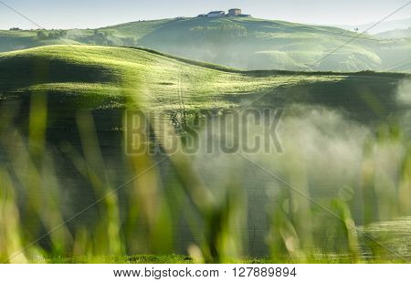 Tuscan Summer Green Fields and Cottage Buildings Shoot Through Grass