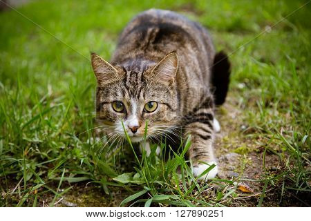 Beautiful multicolor funky cat sitting on grass and looking at camera