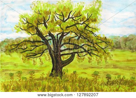 Hand painted picture watercolours - big Willow tree on green meadow.