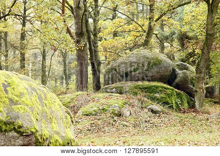 Image of the big boulder in the coniferous forest
