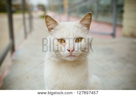 Beautiful sick white cat looking at camera, copy space
