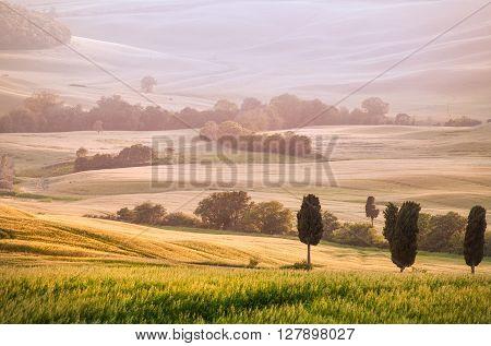 Summer Sunset Light in Scenic Tuscan Landscape