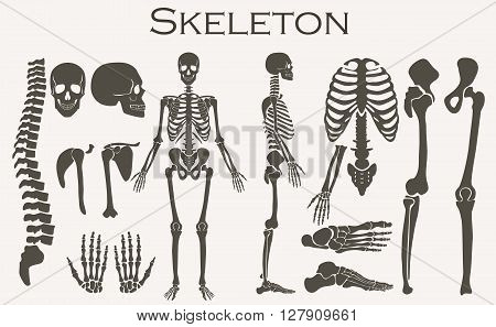 Human bones skeleton silhouette  collection set. High detailed Vector illustration