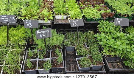 Punnets of seedlings for sale at a farmers market