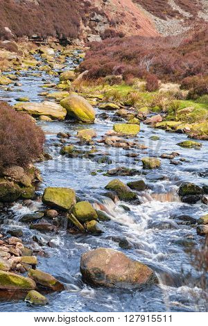 Moorland River Among Heather Flowers at Spring