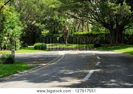 Beautifully Curving Tree Lined Road