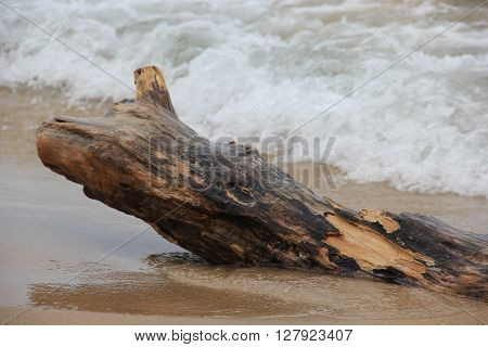 Waves wash over a piece of drift wood in Sleeping Bear Dunes National Lakeshore, Michigan.