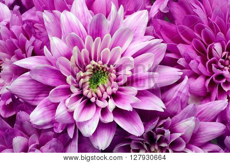 Details Of Pink Flower For Background Or Texture