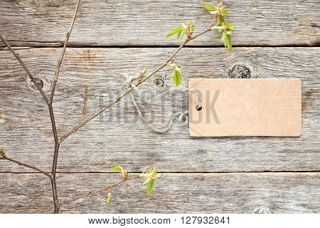 Tree branch with blank tag tied with string. Copy-space.
