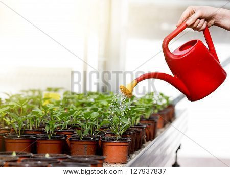 Watering Sprouts In Flower Pots