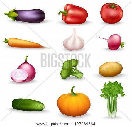Realistic vegetable colorful isolated icons on white background with onion radishes broccoli parsley carrots garlic vector illustration