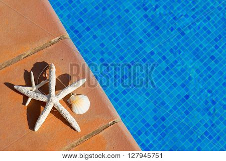 seashells and starfish near water of pool