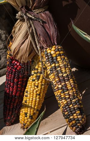 Red and Yellow Indian Corns, food theme